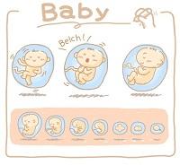 baby in baarmoeder